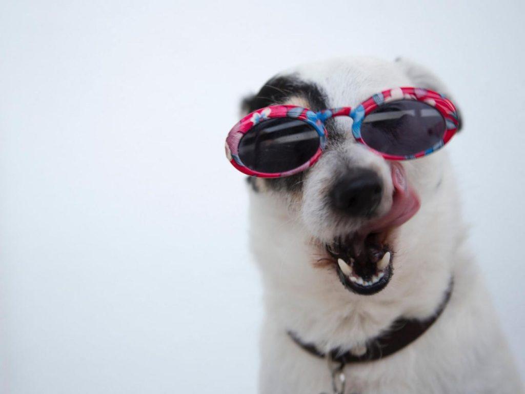 spanish phrases with animals (dog)